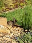 Friendly forager in Judah