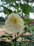 Trumpet flower in Judah