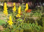 More monarchs in Judah