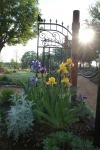 Irises at Zebulun's Gate