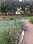 Pathway in bloom