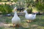 Happy ducks!