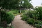 Judah's Rose Garden
