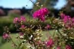 garden_21