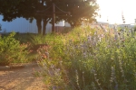 sunsetforblog1372