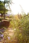sunsetforblog1382