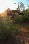 sunsetforblog1383