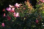 sunsetforblog1391