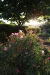 sunsetforblog1392