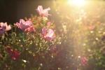 sunsetforblog1393