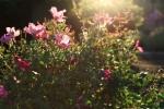sunsetforblog1394