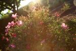 sunsetforblog1396