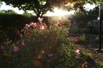 sunsetforblog1397