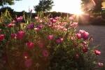 sunsetforblog1403