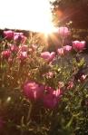 sunsetforblog1404