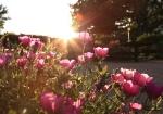 sunsetforblog1405