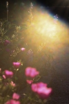 sunsetforblog1407