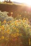sunsetforblog1411