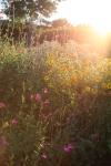sunsetforblog1413