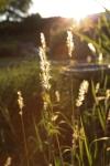 sunsetforblog1420