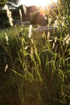 sunsetforblog1422