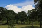 cloudsaug29