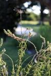 gardenaug25_10