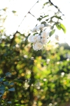 gardenaug25_8