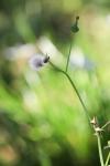 garden1016_20