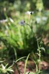 garden1016_21