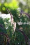 garden1016_27