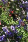garden1016_37