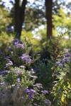garden1016_46
