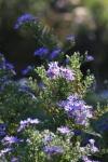 garden1016_48