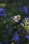 garden1016_49