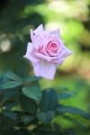 garden1016_53