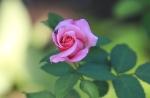 garden1016_56