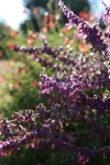 garden1021_11