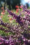 garden1021_12