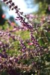 garden1021_13