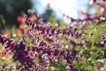 garden1021_17