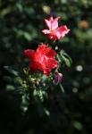 garden1021_26