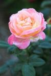 garden1021_27