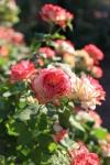 garden1021_29