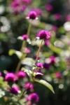 garden1021_30