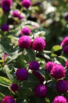 garden1021_34