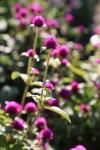 garden1021_35