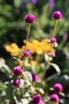 garden1021_38