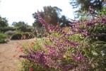 garden1021_4