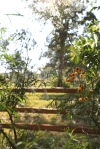 garden1021_43